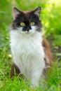 Kitten sitting graziosa in erba colpo all aperto Fotografia Stock Libera da Diritti