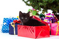 Kitten sitting inside of a christmas gift Royalty Free Stock Image