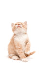 Kitten sitting on the studio floor looking up front view of a at blank copy space Royalty Free Stock Images