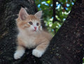 Kitten sitting in a tree close up Stock Photos