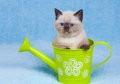 Kitten sitting in the watering cat Royalty Free Stock Photo