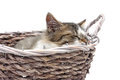 Kitten sleeps in a wicker basket on a white background Royalty Free Stock Photo