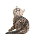 Kitten turned back isolated Royalty Free Stock Photos