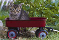 Kitten in a wagon. Royalty Free Stock Images