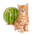 Kitten and watermelon