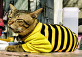 Kitten wearing a black and yellow pullover sweet portrait of Stock Photo