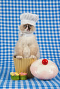 Kitten wearing chef outfit Stock Photos