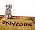 Kitten and welcome mat Royalty Free Stock Photography