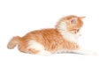 Kitten in white Royalty Free Stock Photo