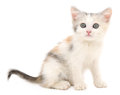 Kitten on a white background small Royalty Free Stock Image