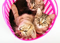 Kittens in a basket group of small Stock Images