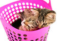 Kittens in a basket group of small Royalty Free Stock Photography