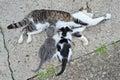 Kittens enjoying milk mom cat feeding her cute Stock Image