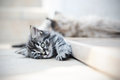 Kittens are funny cute cats suffering from the heat and lying on the doorstep Royalty Free Stock Image