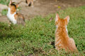 Kittens on the grass sitting outdoor Stock Photography