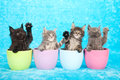 Kittens in jars Stock Photos