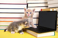Kittens at miniature computer Royalty Free Stock Photo