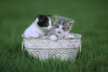 Kittens Outdoors in a Green Meadow of Grass Stock Images
