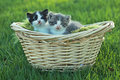 Kittens Outdoors in Natural Light Stock Photos