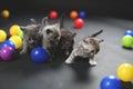Kittens playing balls Royalty Free Stock Photo