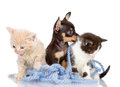 Kittens and the puppy dog isolated on white background Royalty Free Stock Photography