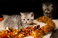 Kittens sibs with christmas decorations Royalty Free Stock Photo