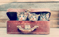 Kittens are sitting in suitcase cute vintage on a wooden background Royalty Free Stock Photos