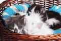Kittens sleeping Royalty Free Stock Photo