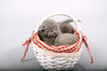 Kittens sleeping in a basket Royalty Free Stock Photo