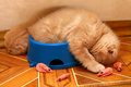 Kittens sleeping after meals in a bowl Royalty Free Stock Photography