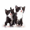 Kittens on white background looking curious Stock Photo