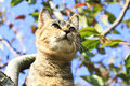 A kitty on the apple tree Royalty Free Stock Photo