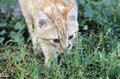 Kitty beautiful red in yard Royalty Free Stock Images