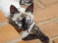 Kitty Cat Lying Down Royalty Free Stock Photo