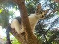 Kitty cat on the tree 2 Royalty Free Stock Photo
