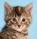 Kitty face Royalty Free Stock Photo