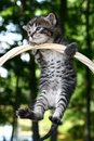 Kitty hang on Royalty Free Stock Photos