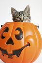 Kitty in Pumpkin Stock Photography