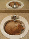 Kitty reflection ginger cat sleeping in the bathroom sink Stock Image