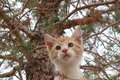 Kitty in the tree Royalty Free Stock Photo