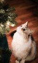 Kitty under the Christmas tree Royalty Free Stock Photo