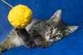 Kitty with yarn ball Royalty Free Stock Photo
