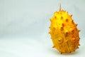 Kiwano cucumis metuliferus exotic vegetable tropical orange fruit Royalty Free Stock Image