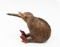 Kiwi bird toy sitting on the white background Stock Image