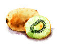 Kiwi fruit original watercolor ilustration Royalty Free Stock Photography