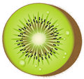 Kiwi Fruit - Vector Royalty Free Stock Images