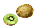 Kiwi fruit watercolor image of whole and half of Stock Image