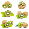Kiwi fruits collection Royalty Free Stock Photos