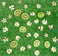 Kiwi slices with chamomile flower on green meadow Stock Photography