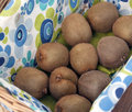 Kiwis basket tablecloth Royalty Free Stock Image